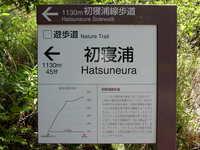 Hatuneura_3